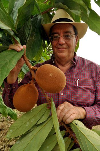 Sergio Cedeño en la hacienda Cañas junto a una mata de cacao.