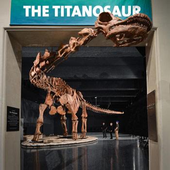 El titanosaurio que se exhibe en el Museo de Historia Natural de Nueva York.