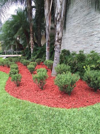 El cubresuelos rojo resalta en las áreas verdes.