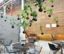 Con las kokedamas se pueden armar llamativos jardines colgantes o verticales.  K