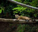 El Parque Nacional del Manu posee unas 221 especies de mamíferos.