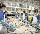 Mil empleos directos genera PetStar, en la planta recicladora en su mayoría.