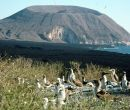 Piqueros patas azules en la Isla Isabela.
