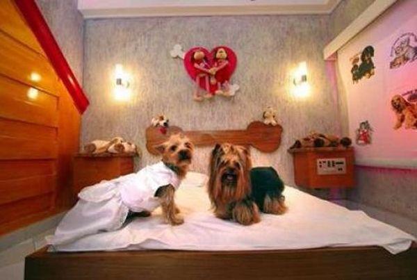 Motel brasileño para mascotas: Romance perruno
