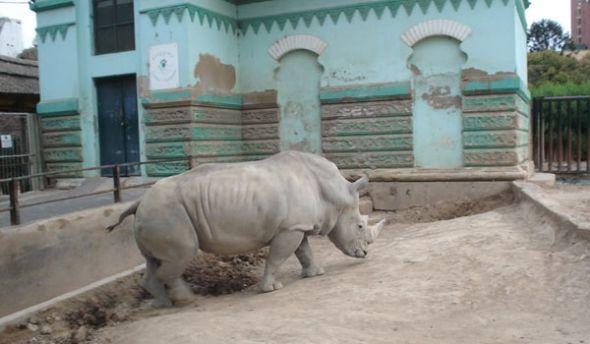En el zoo de Buenos Aires se pueden realizar recorridos por sus instalaciones.