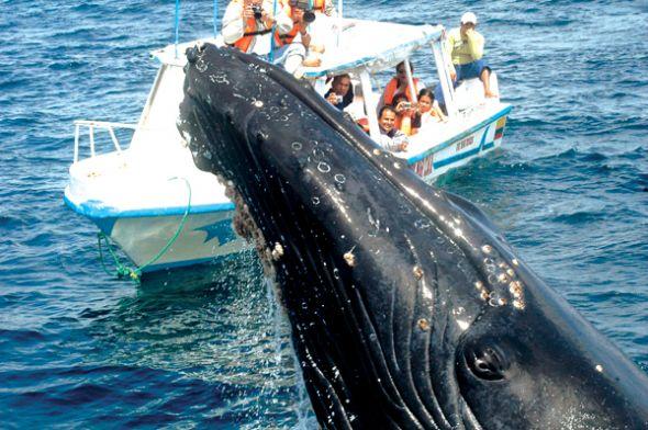Tour de ballenas jorobadas (Puerto López)
