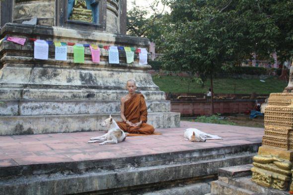 En Bodhgaya, Siddharta Gautama se convirtió en Buda, el iluminado.