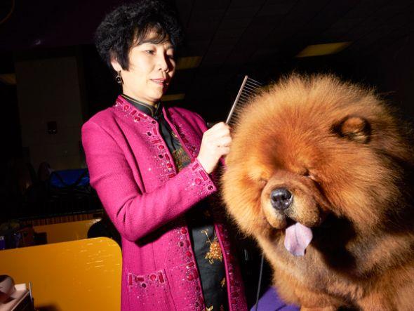Yang Ling peina a su felpudo chow chow, Kin Lun.