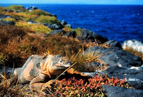 Paisaje de la isla Fernandina en Galápagos.