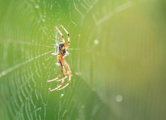 La araña de Cerro Dragón pertenece al género Leucage.