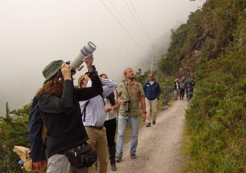 Reserva biológica Yanacocha, destino de aviturismo en Pichincha.