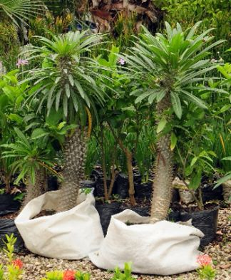 Vida verde ecolog a la revista el universo for Vivero de plantas exoticas