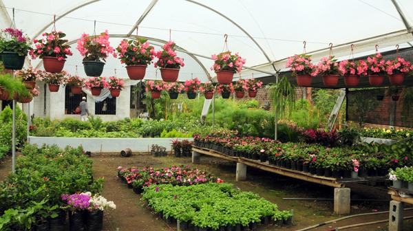 Vida verde ecolog a la revista el universo for Viveros plantas en temuco